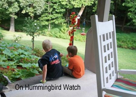 On Hummingbird Watch