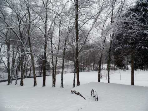 Front yard snow January 2016