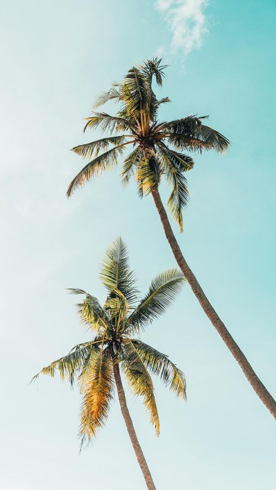 Let's go Coconuts! Enjoy 10 Tropical iPhone Wallpapers!