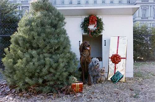 "From left to right, King Timahoe, Pasha, and Vicky ""wait for Santa"" outside their kennel, Dec. 9, 1970."