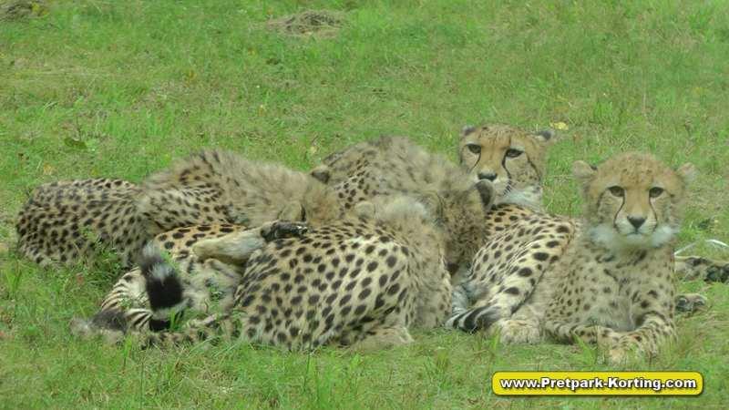 Safaripark Beekse Bergen korting trip report blog 12