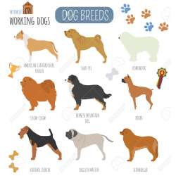 Small Crop Of Working Dog Breeds