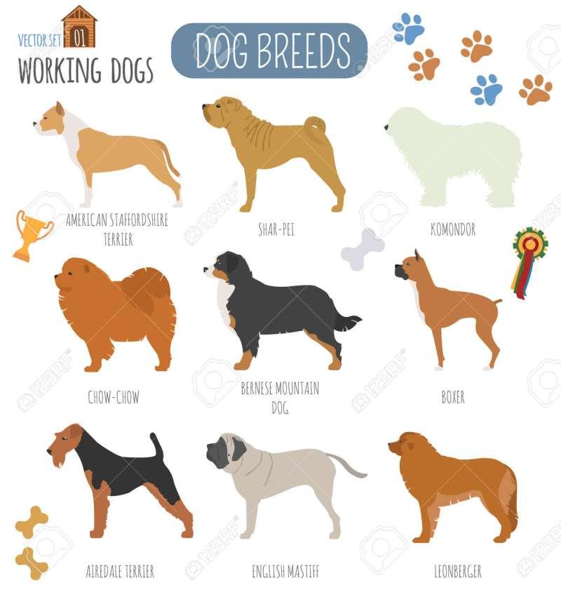 Large Of Working Dog Breeds