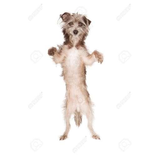 Medium Crop Of Dog Standing Up