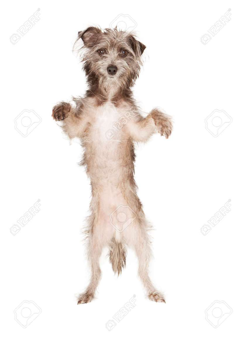 Large Of Dog Standing Up