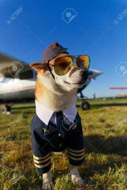 Amazing Shiba Inu Dog A Pilot Suit At Airport Shiba Inu Ny Bark Shiba Inu Ny Memes Ny Photo A Pilot Suit At Airport Stock Photo Ny Photo Shiba Inu Dog