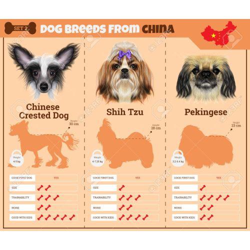 Medium Crop Of Chinese Dog Breeds