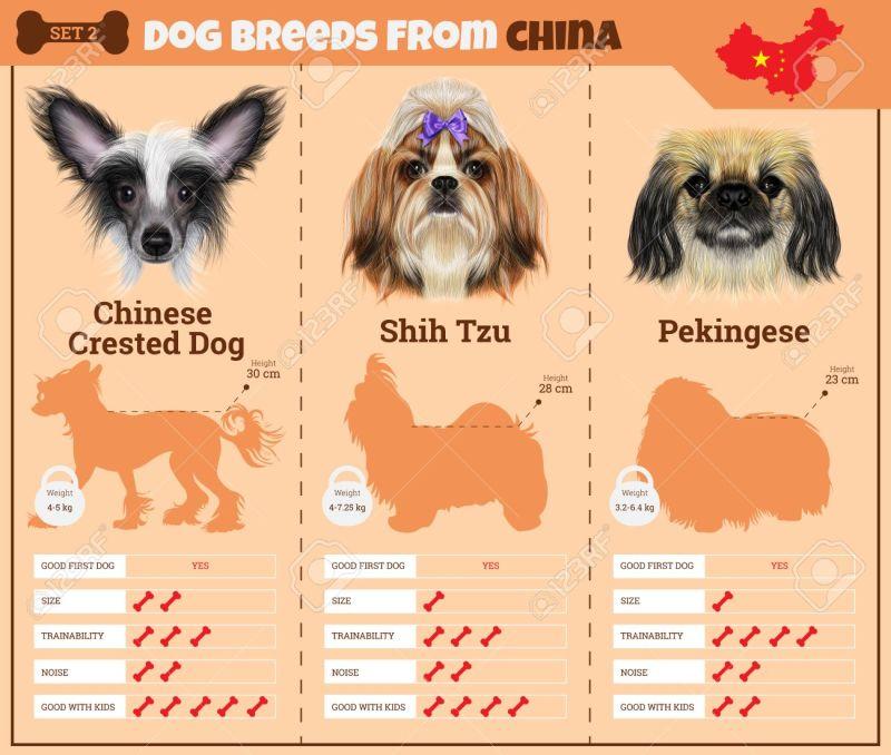 Large Of Chinese Dog Breeds