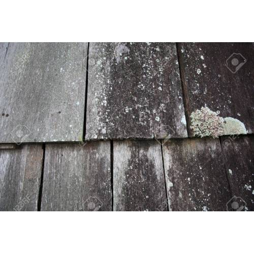 Medium Crop Of White Mold On Wood