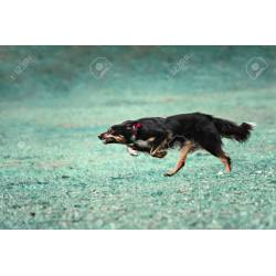Small Crop Of How Fast Can A Dog Run