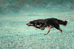 Small Of How Fast Can A Dog Run