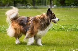 Small Of Long Hair Dog