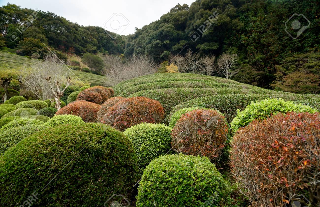 Fullsize Of Japanese Garden Plants