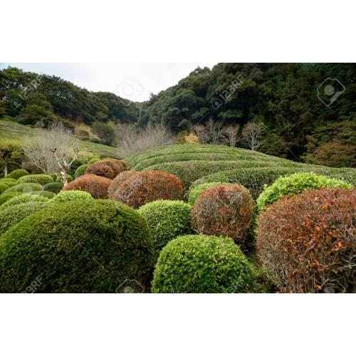 Medium Crop Of Japanese Garden Plants