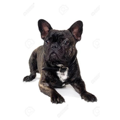Medium Crop Of French Dog Names