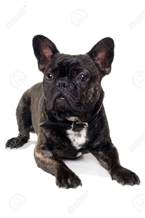 Medium Of French Dog Names