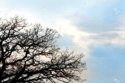 Small Of Burr Oak Tree