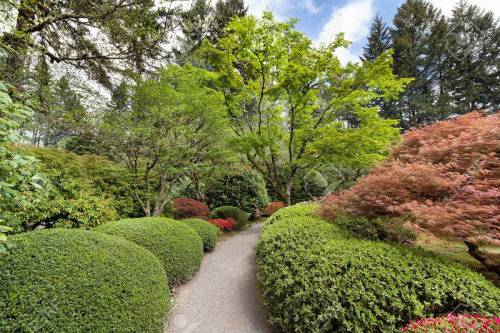 Medium Of Japanese Garden Plants