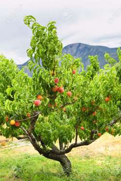Small Of Bonide Fruit Tree Spray