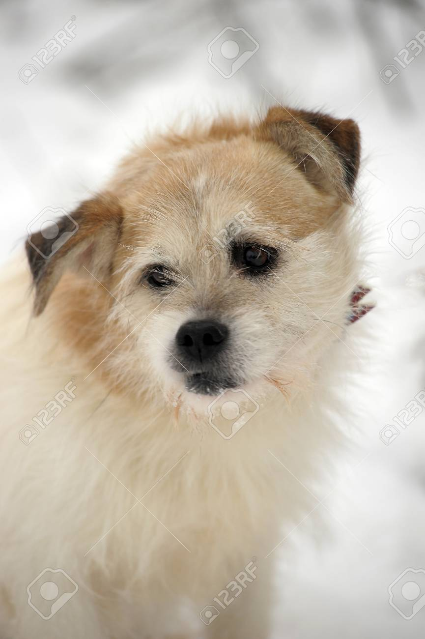 Fullsize Of Lap Dog Breeds