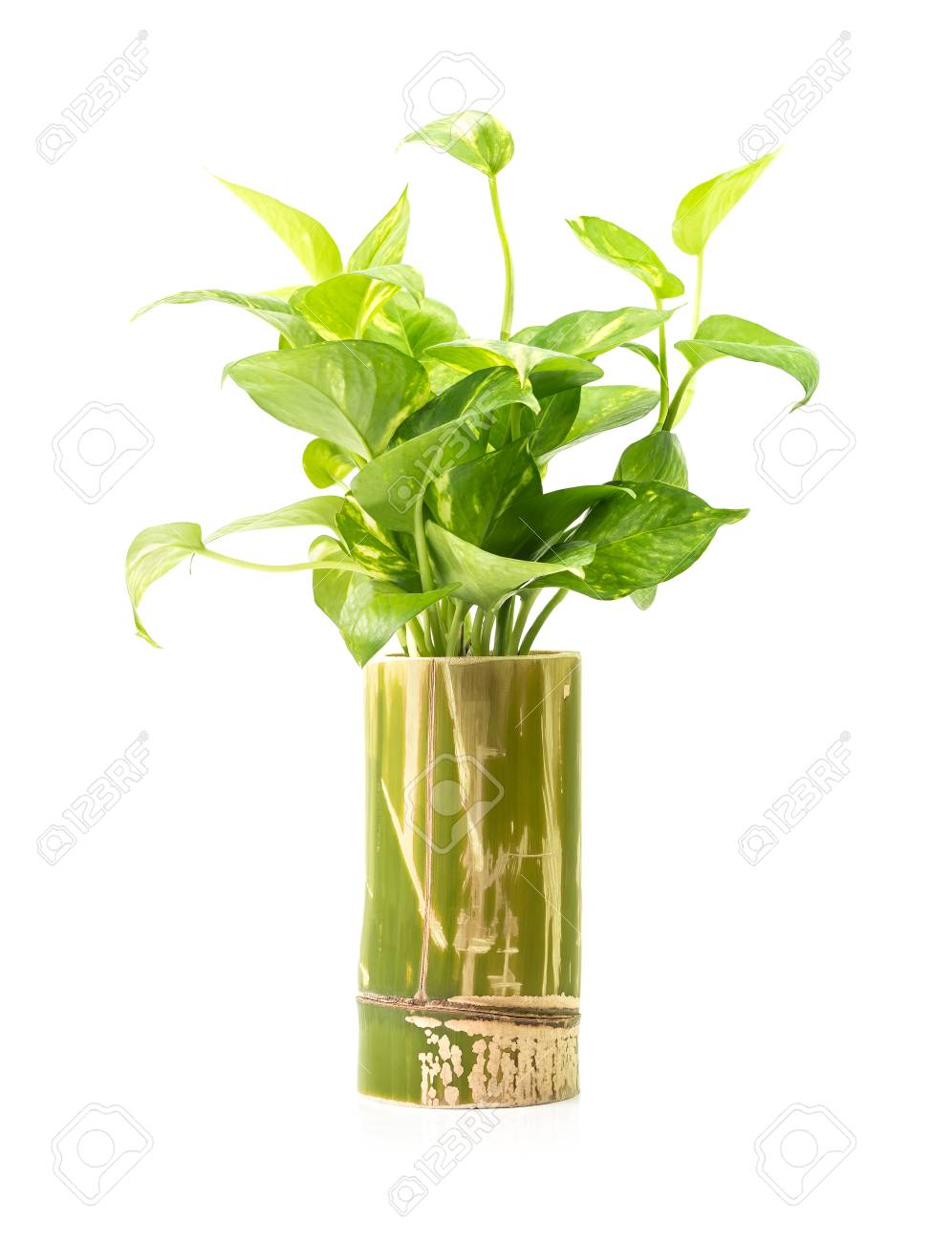 Snazzy Bamboo Wooden Vase Isolated On Backgroundwith Clipping Path Stock Photo Green Houseplant Green Houseplant Bamboo Wooden Vase Isolated On Stock houzz 01 Bamboo House Plant