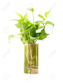 Small Of Bamboo House Plant