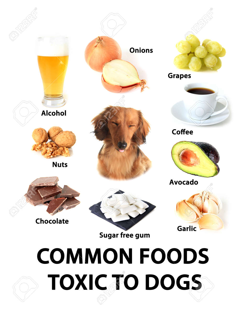 Fullsize Of Are Avocados Bad For Dogs