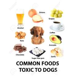 Small Crop Of Are Avocados Bad For Dogs