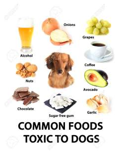 Small Of Are Avocados Bad For Dogs
