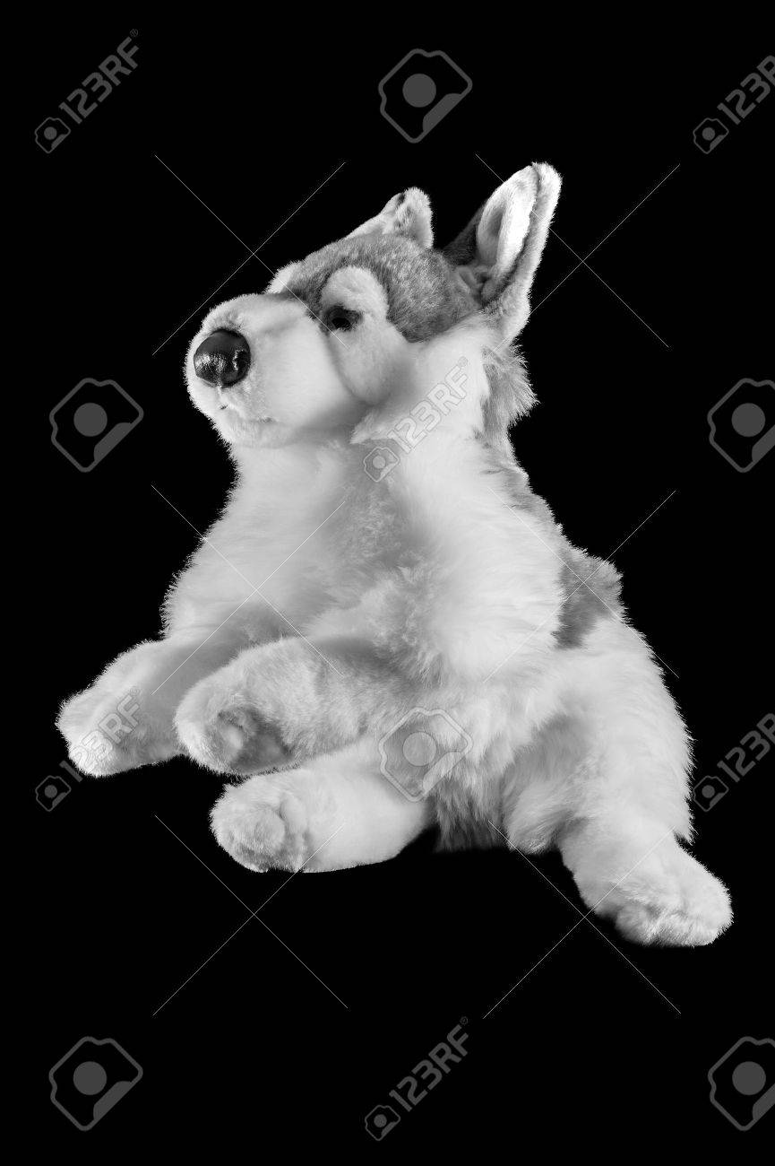 Famed A Norrn Inuit Dog On A Black Background Stock Photo Norrn Inuit Dogs From Mahlek Kennels Norrn Inuit Dogs Canada Stock Photo Toy A Norrn Inuit Dog On A Black Background Toy bark post Northern Inuit Dogs