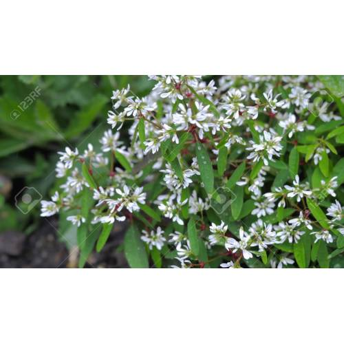 Medium Crop Of Small White Flowers