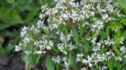 Small Of Small White Flowers