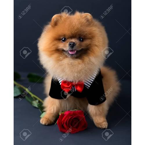 Medium Crop Of Dog In Suit