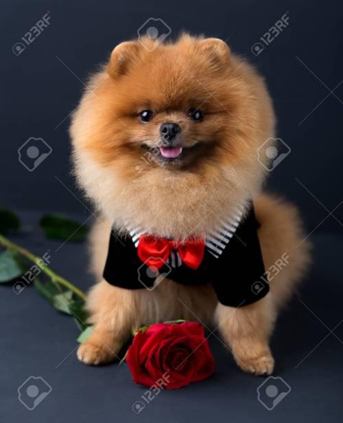 Medium Of Dog In Suit