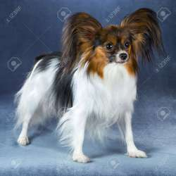 Small Of Beautiful Dog Breeds
