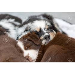 Small Crop Of Cute Puppies Sleeping