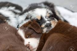 Small Of Cute Puppies Sleeping