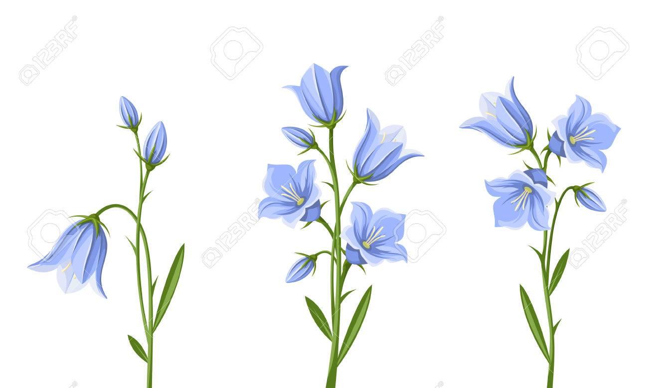 Fullsize Of Blue Bell Flower