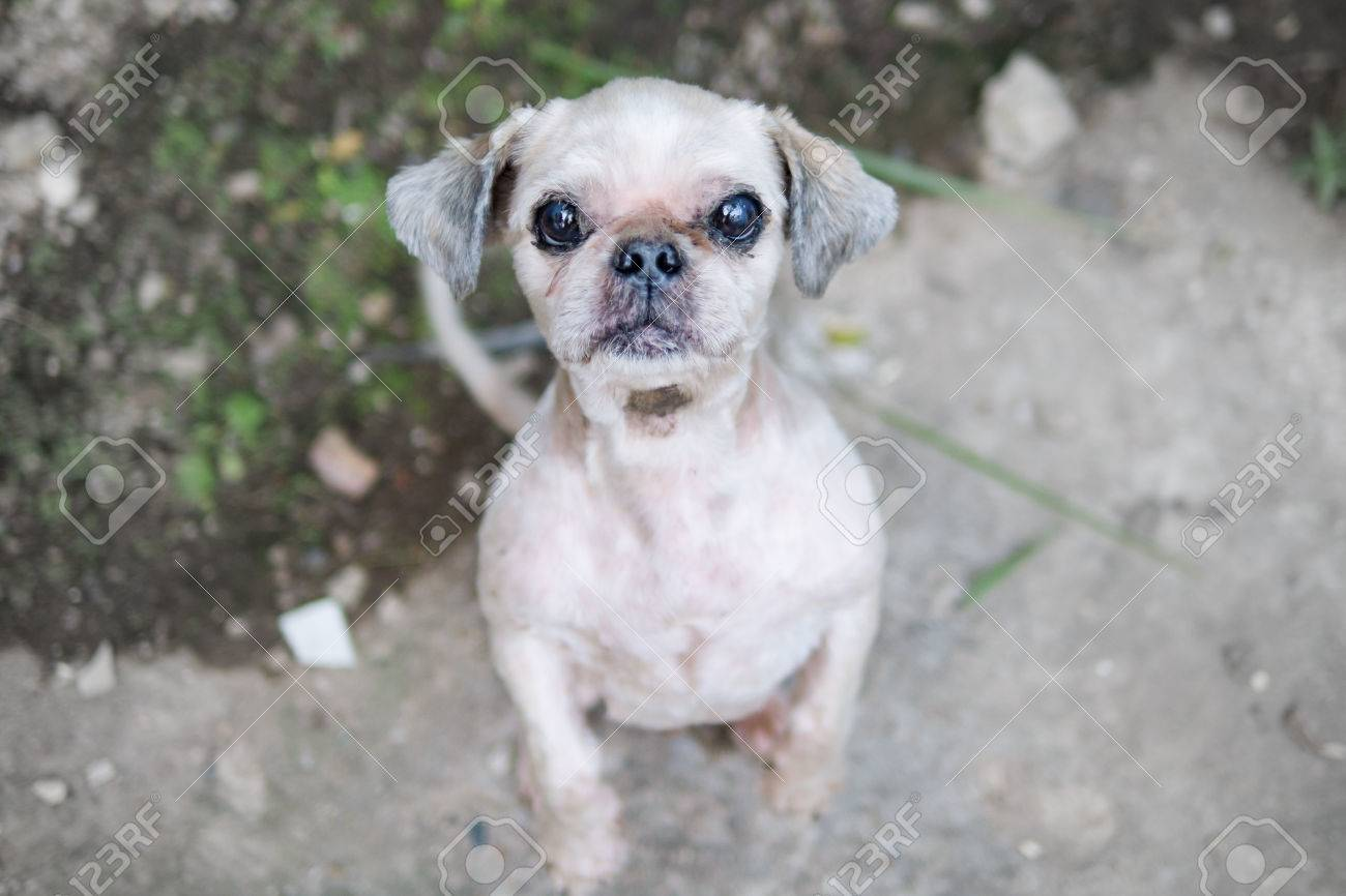Artistic Ugly Dog Has Bite Stock Ugly Hunting Dog Breeds Ugly Dog Breeds Family Feud Ugly Dog Has Bite Stock Photo bark post Ugly Dog Breeds