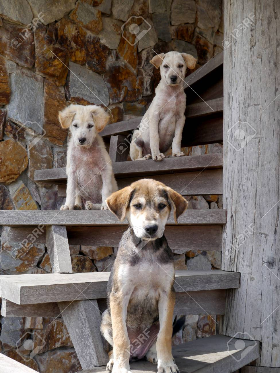 Prodigious Dogs Posing Looking Ny On Stairs Looking Ny On Stairsstock Photo Dogs Posing Looking Ny On Stairs Looking Ny Stock Ny Looking Cartoon Dogs Most Ny Looking Dogs bark post Funny Looking Dogs