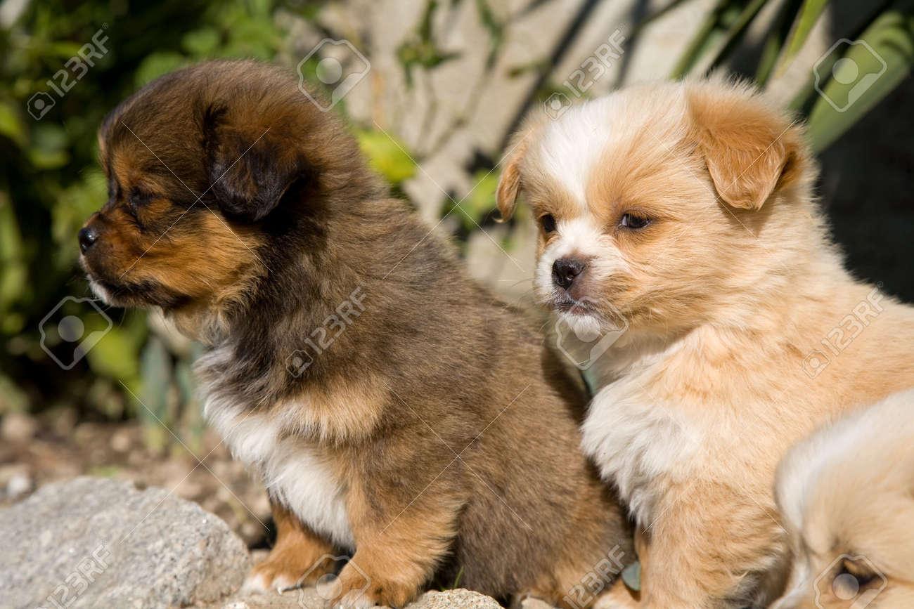 Fullsize Of Happy Puppy Gif