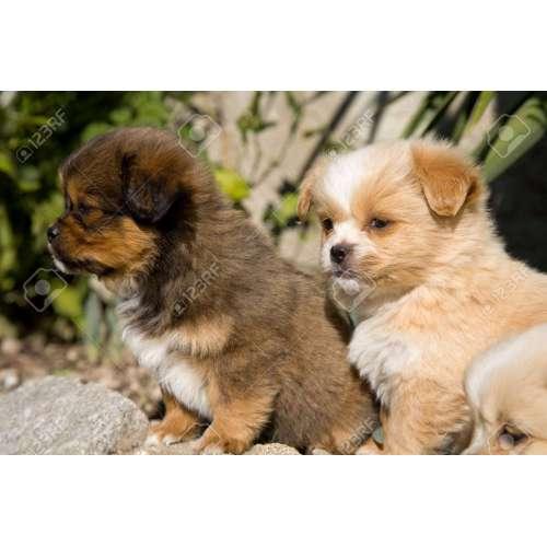 Medium Crop Of Happy Puppy Gif