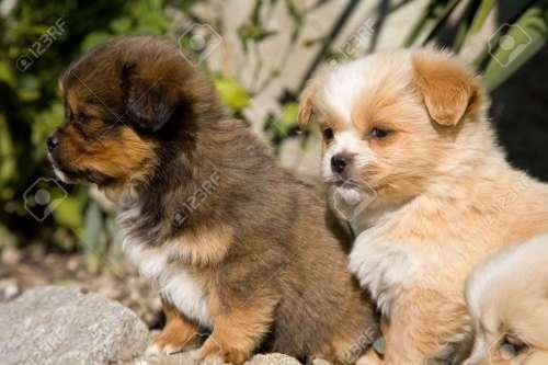 Medium Of Happy Puppy Gif