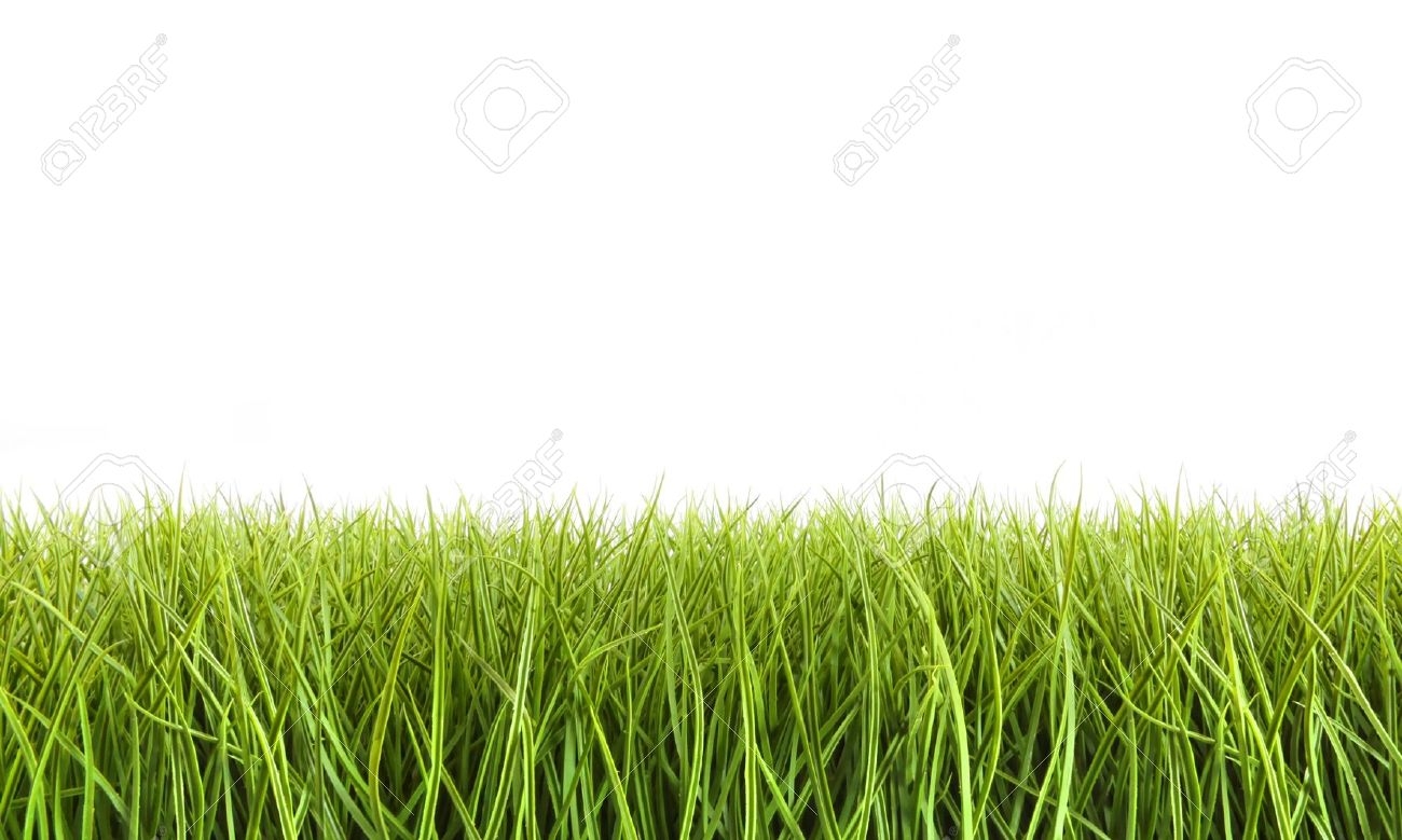 Tall Grass Texture Stock Photo Tall Grass Against A White