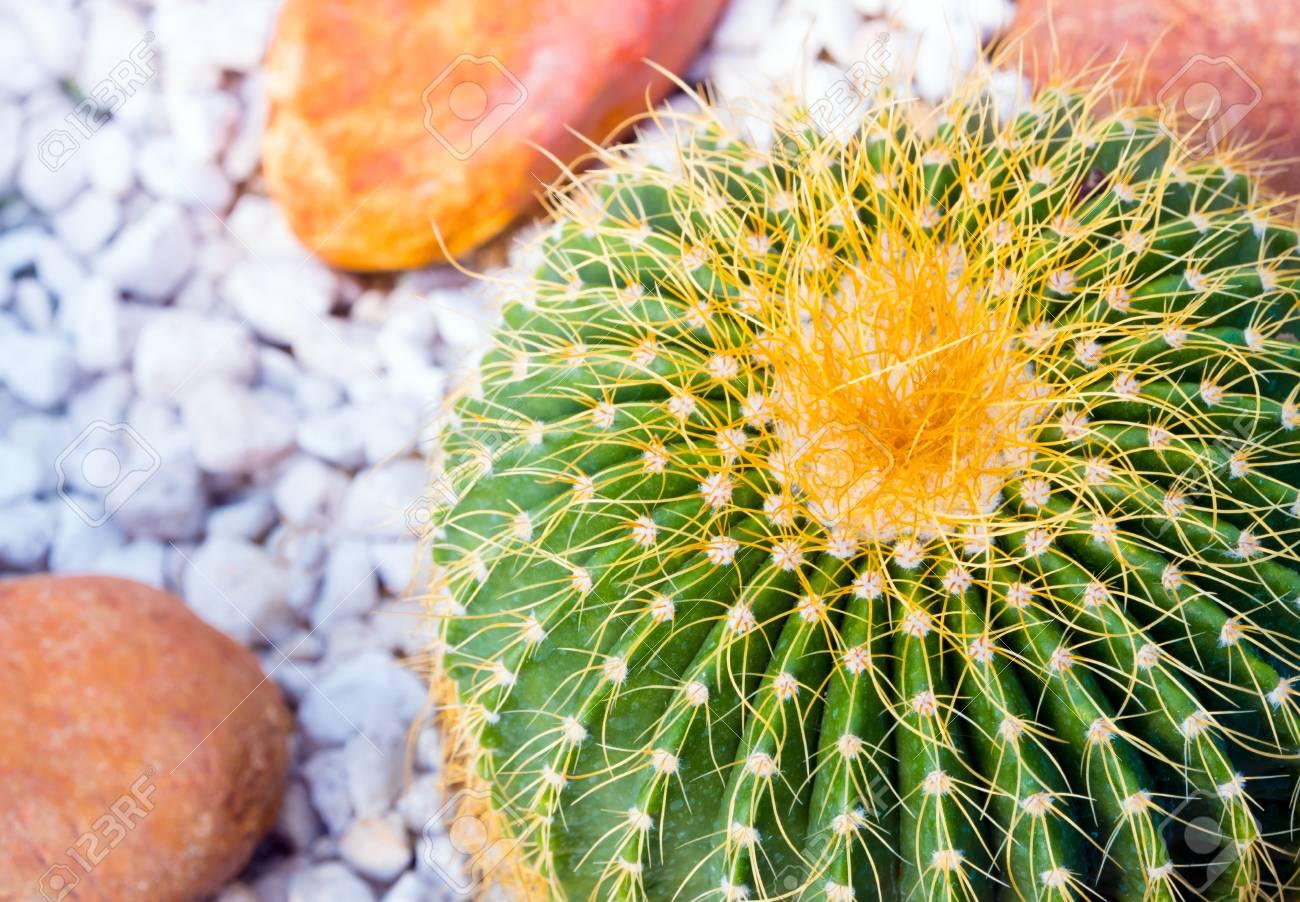 Fullsize Of Golden Barrel Cactus