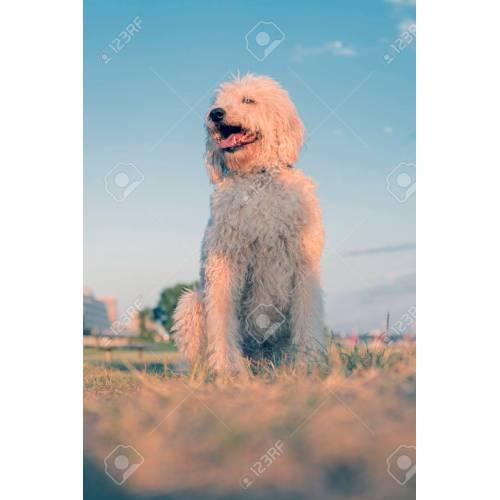Medium Crop Of Big Fluffy Dog