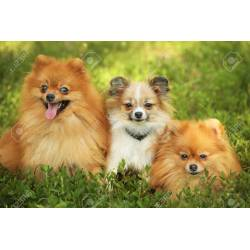 Small Crop Of Cute Fluffy Dogs