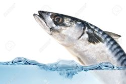 Small Of Fish Jumping Out Of Water