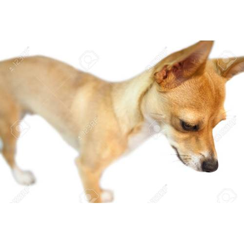 Medium Crop Of Dogs With Pointy Ears