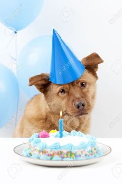 Formidable Balloons Stock Cake Photo Dog Birthday Party Delivery Austin